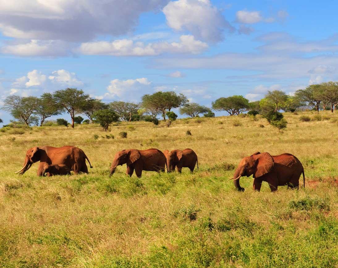 Safari Afrique, je viens tout juste de réserver
